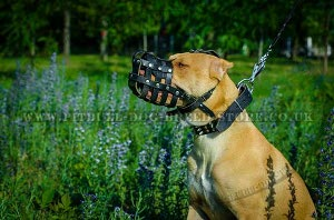 Best Muzzle for Pitbull Dogs