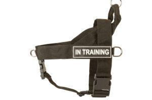 Best No Pull Harness for Pitbulls
