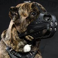 Best Type of Muzzle for Cane Corso Work and Training