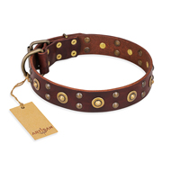"""Caprice of Fashion"" FDT Artisan Brass Studded Brown Dog Collar"