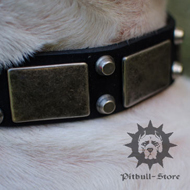 Bull Terrier Collar of Real Leather with Nickel Plates and Studs