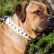 Cane Corso Collar of Spiked and Studded White Leather