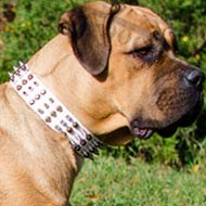 Cane Corso Collar White Leather with Spikes and Pyramids Columns