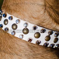 Cane Corso Collar of White Leather with Studs and Pyramids