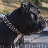 Cane Corso Dog Collar Leather, Spiked and Studded