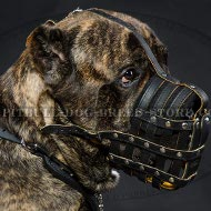 Cane Corso Dog Muzzle Leather Nappa Padded Royal