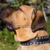 Cane Corso Leather Collar with Caterpillar Nickel Studs