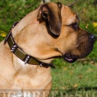 Cane Corso Leather Dog Collar with Plates and Spikes
