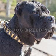 Cane Corso Leather Dog Collar with Brass Plates