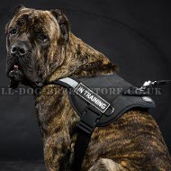 Cane Corso Training Harness Nylon Reflective with Patches
