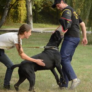 Dog Training with Bite Sleeves