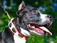 pitbull-uk-amstaff-collars-subcategory-leftside-menu