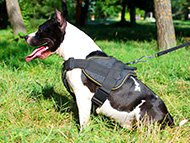 pitbull-uk-amstaff-harnesses-subcategory-leftside-menu