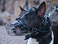 pitbull-uk-bullterrier-muzzles-subcategory-leftside-menu