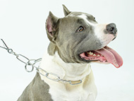 pitbull-uk-staffordshire-bullterrier-chain-collars-subcategory-leftside-menu