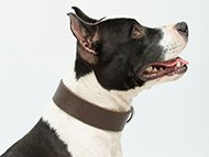 pitbull-uk-staffordshire-bullterrier-collars-subcategory-leftside-menu