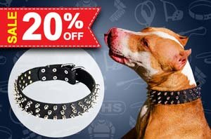 Christmas Dog Collars UK