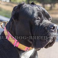 Collar for Cane Corso Girl, Pink Leather with Plates and Spikes