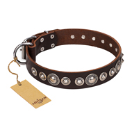"""Step and Sparkle"" FDT Artisan Cool Dog Collar of Brown Leather"