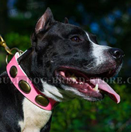 Head-spinning Pink Dog Collar for Amstaff