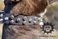 Leather Dog Collar with Pyramides | Customized Dog Collar
