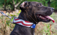 "Unique Dog Collar with Exclusive Painting ""American Pride"""