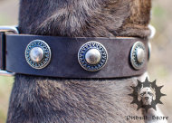 Dog Collar Designer | Leather Dog Collar for Staffy
