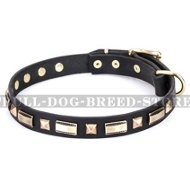 "Dog Collar for American Staffy ""Golden Elegance"" FDT Artisan"