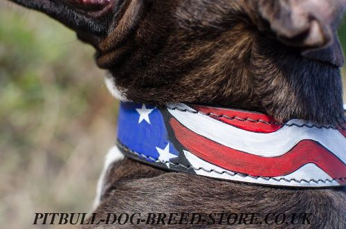 Pitbull Dog Collars