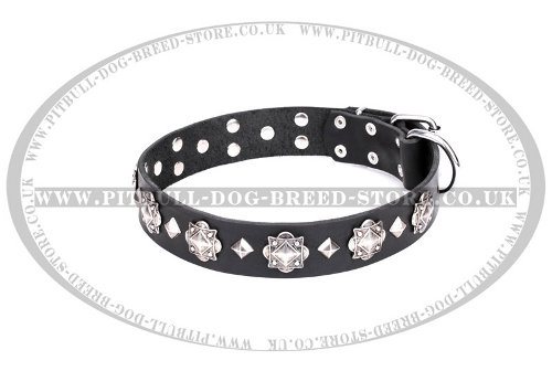 American Staffy Dog Collar