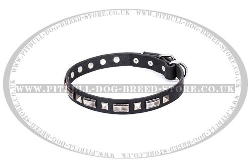 American Staffy Dog Collars