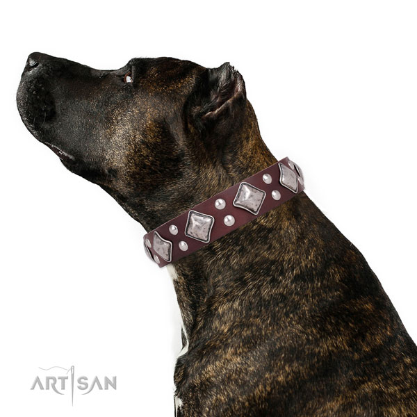 Amstaff Accessories