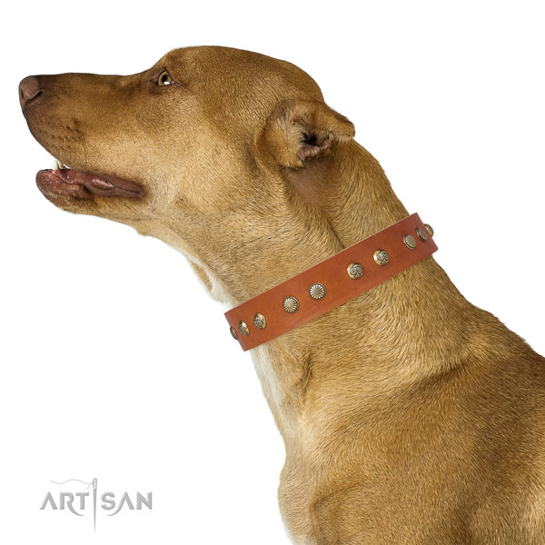 Best Collar for Pitbull