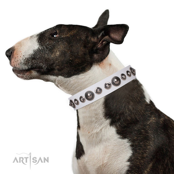 Best Collar for Staffy