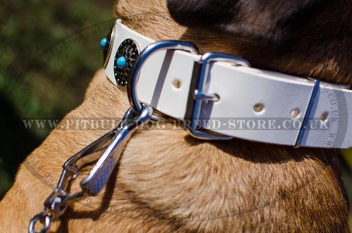 Best Dog Collar for Cane Corso
