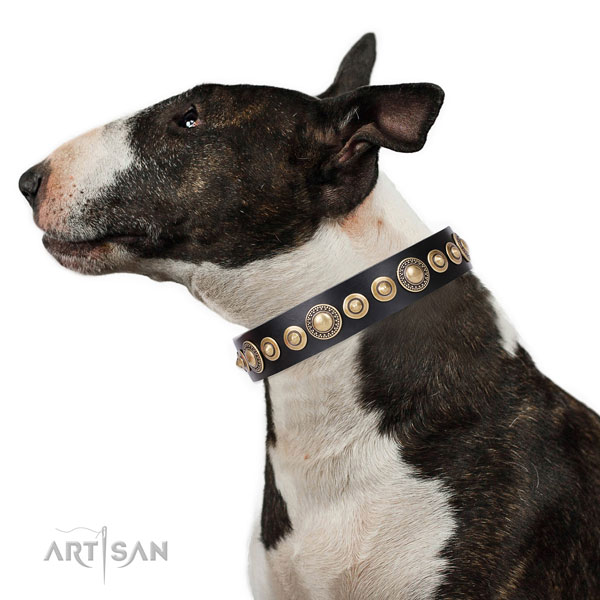 Brass Studded Dog Collar