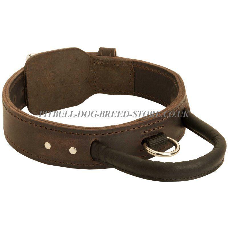 Dog Training Collars For Big Dogs