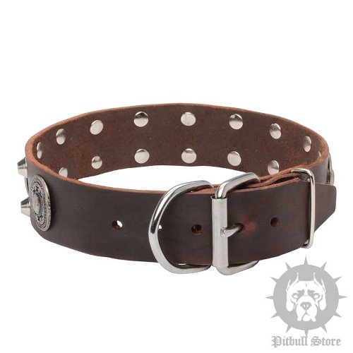 Gorgeous Dog Collar