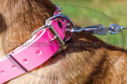Cane Corso Leather Collars