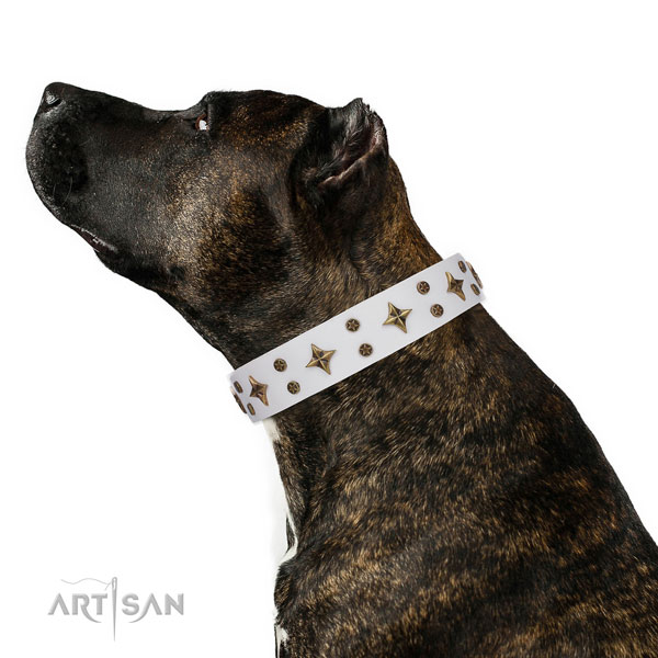 Chic Dog Collar