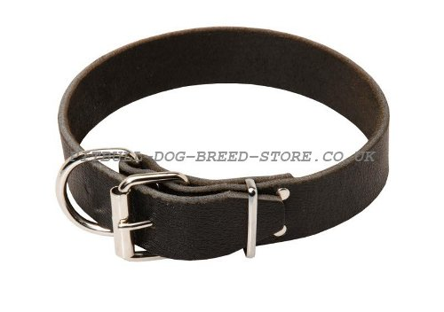 Classic Leather Dog Collar UK