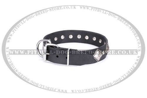 Collars for Staffordshire Bull Terriers