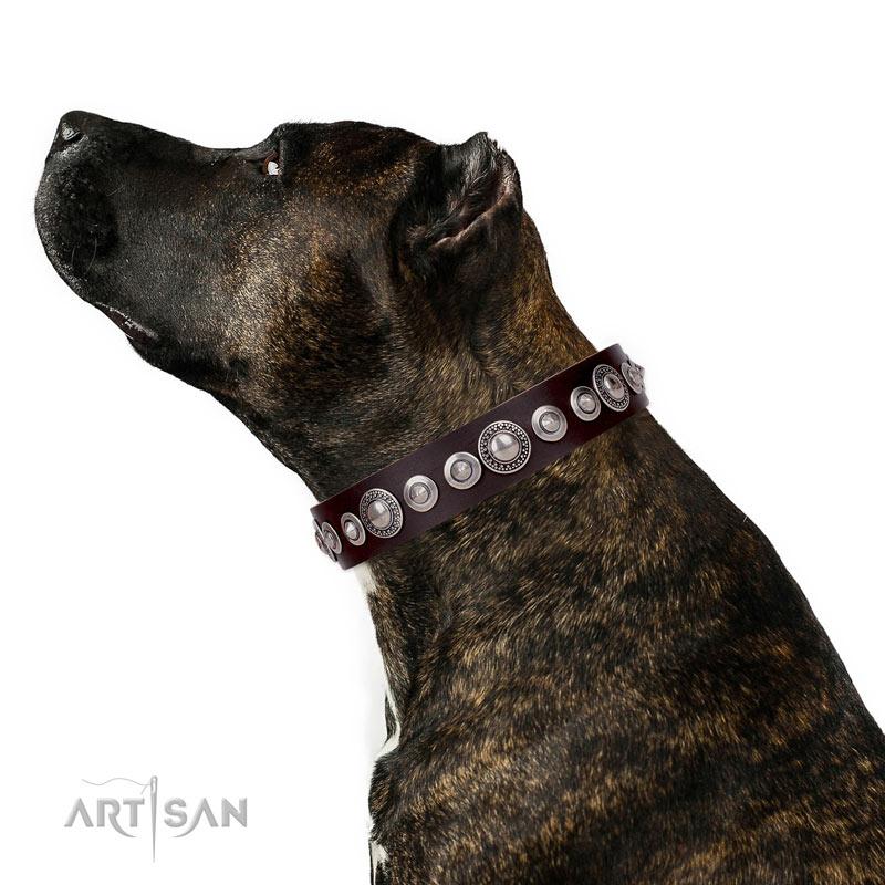 Sparkle Dog Collars Uk