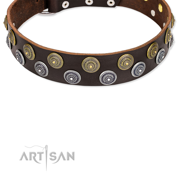Cool Pet Collars