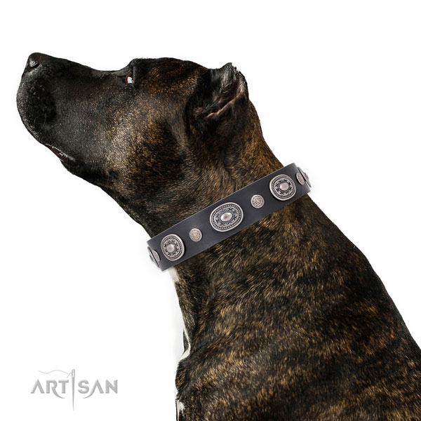 Custom Collars for Dogs