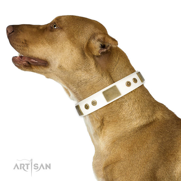 Custom Leather Pitbull Collars