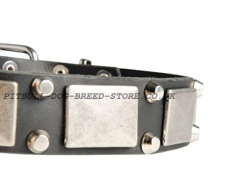 Decorated Leather Dog Collars UK