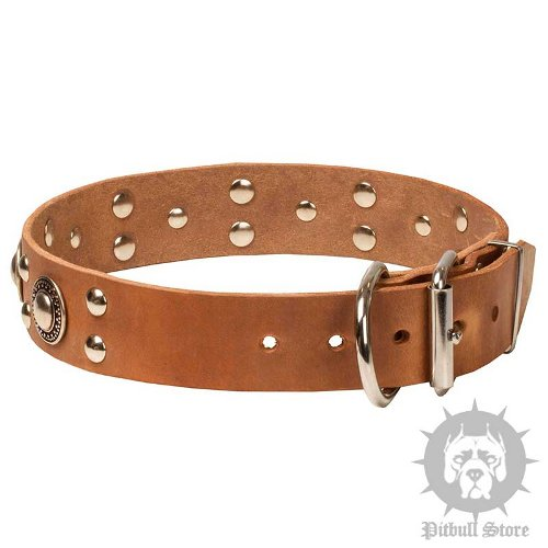 Designer Dog Collar UK