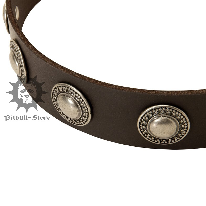 Leather Dog Collar Designer Dog Collar