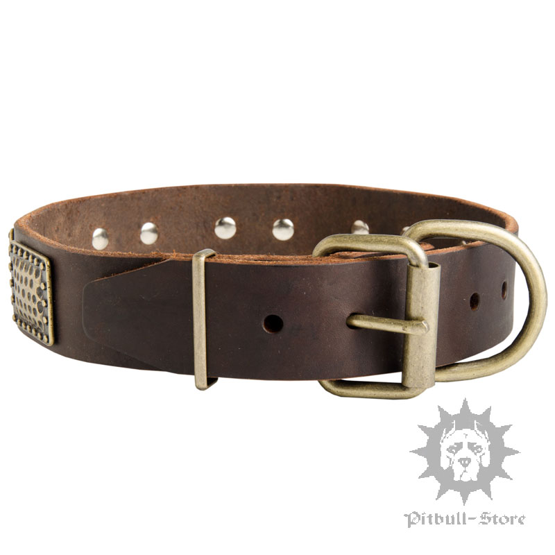 Pitbull Dog Collar Stylish Dog Collar New
